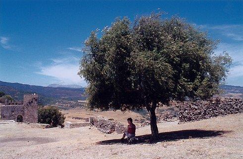 RHôNE-ALPES : Auprés de mon arbre